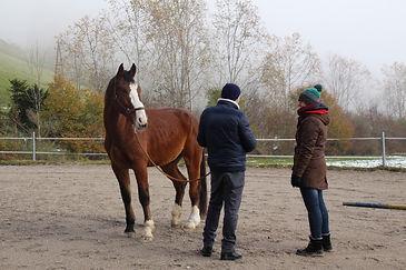 Coach mit Klient und Pferd Francesco