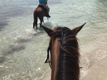 Horseback Riding in Montego Bay