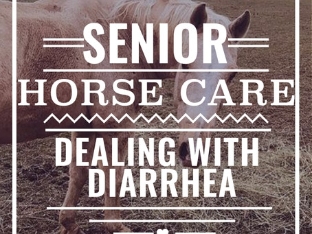 Senior Horse Care - Dealing with Diarrhea