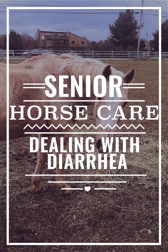 Senior Horse Care - Dealing with Diarrhea