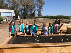 Girl ScoutsGardenBox