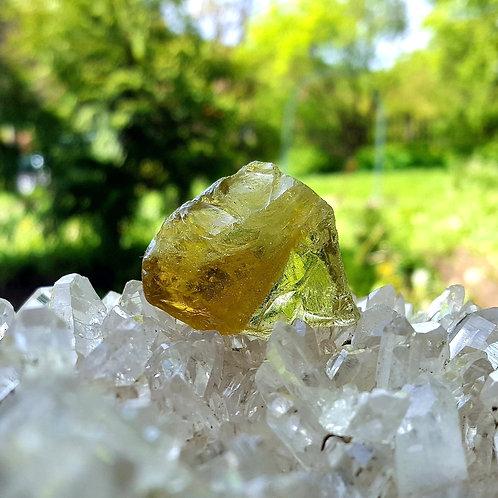 Terra Olive Andara 22 gram