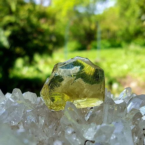 Terra Olive Andara 12 gram