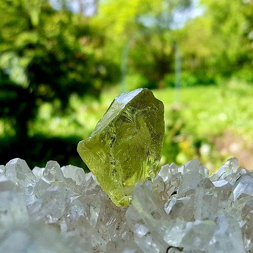 Terra Olive Andara 15 gram