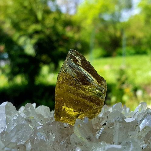 Terra Olive Andara 21 gram