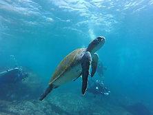 Isla_Galápagos.jpg