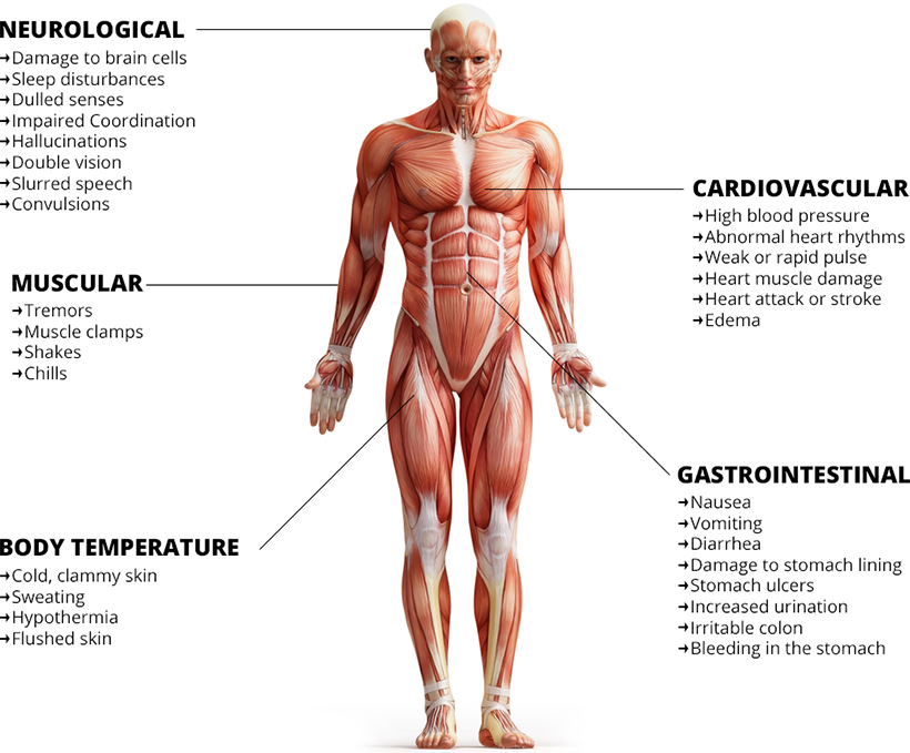 How Alcohol Affects Vital Body Systems Elimutanzania