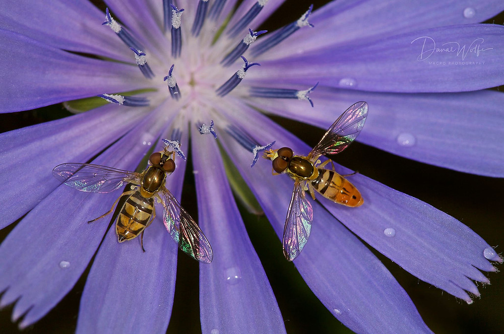 Photo by Danae Wolfe © Chasing Bugs