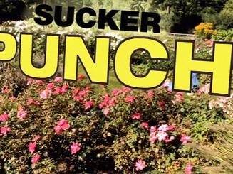 Sigrid's Sucker Punch AR