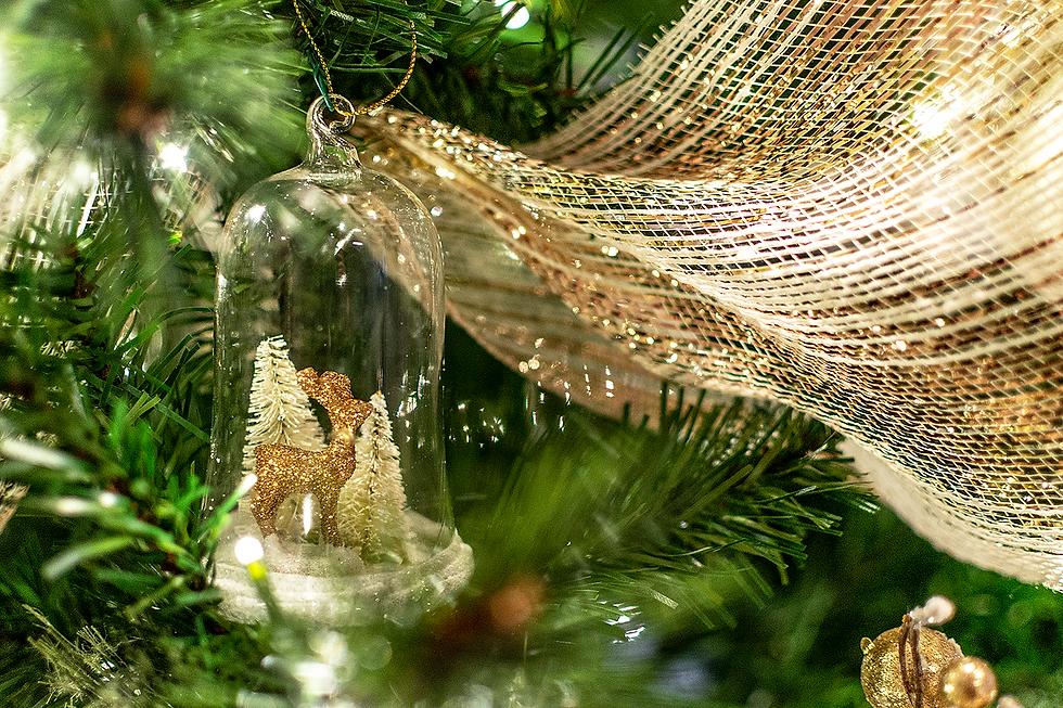 JG Tree 18.png