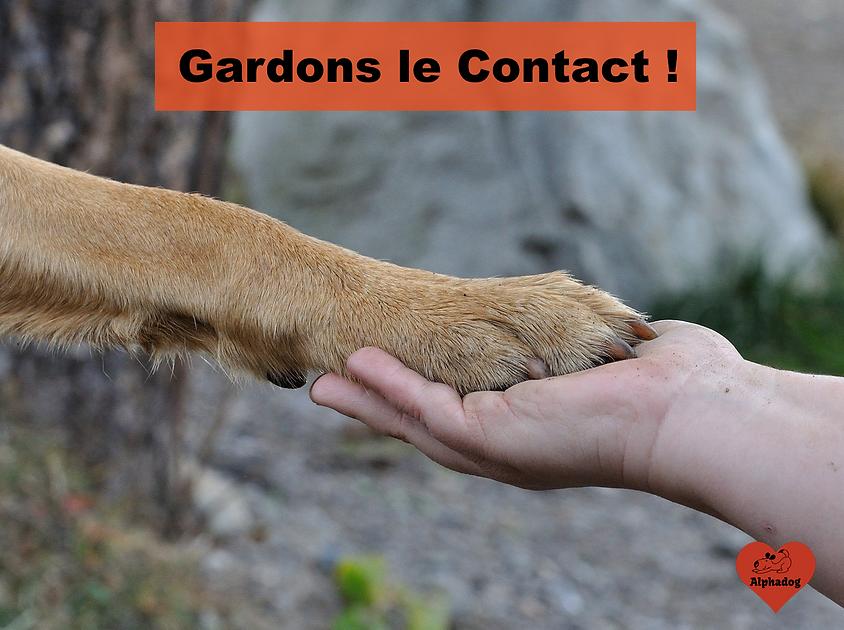 Contacter un expert en éducation canine