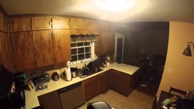 Those times the cat got blamed...