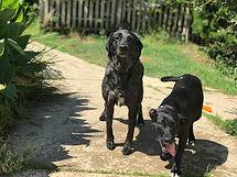 L&R Dog Rescue Navarre Santa Rosa County Escambia County Okaloosa County FL