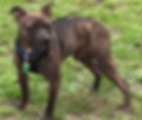 Dog Shih Tzu Purebreed Mud Rescue Rescuedog Shelter Shelterdog