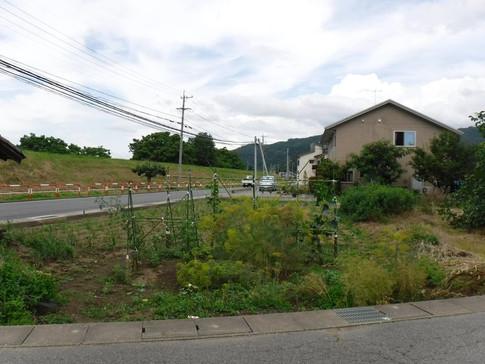 松代町小島田県道沿いの農地_1.JPG