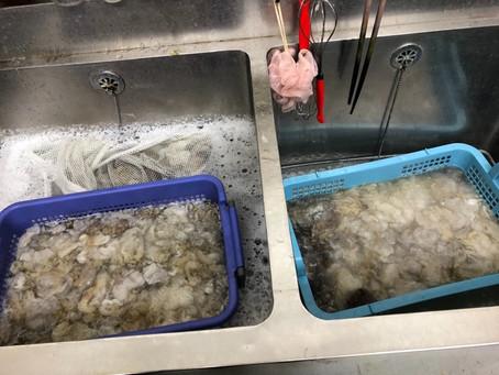 ペテンデールを洗いました