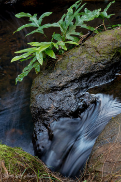 Queens Bath Creek