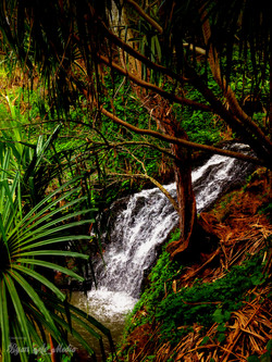 Queens Bath Creek Falls