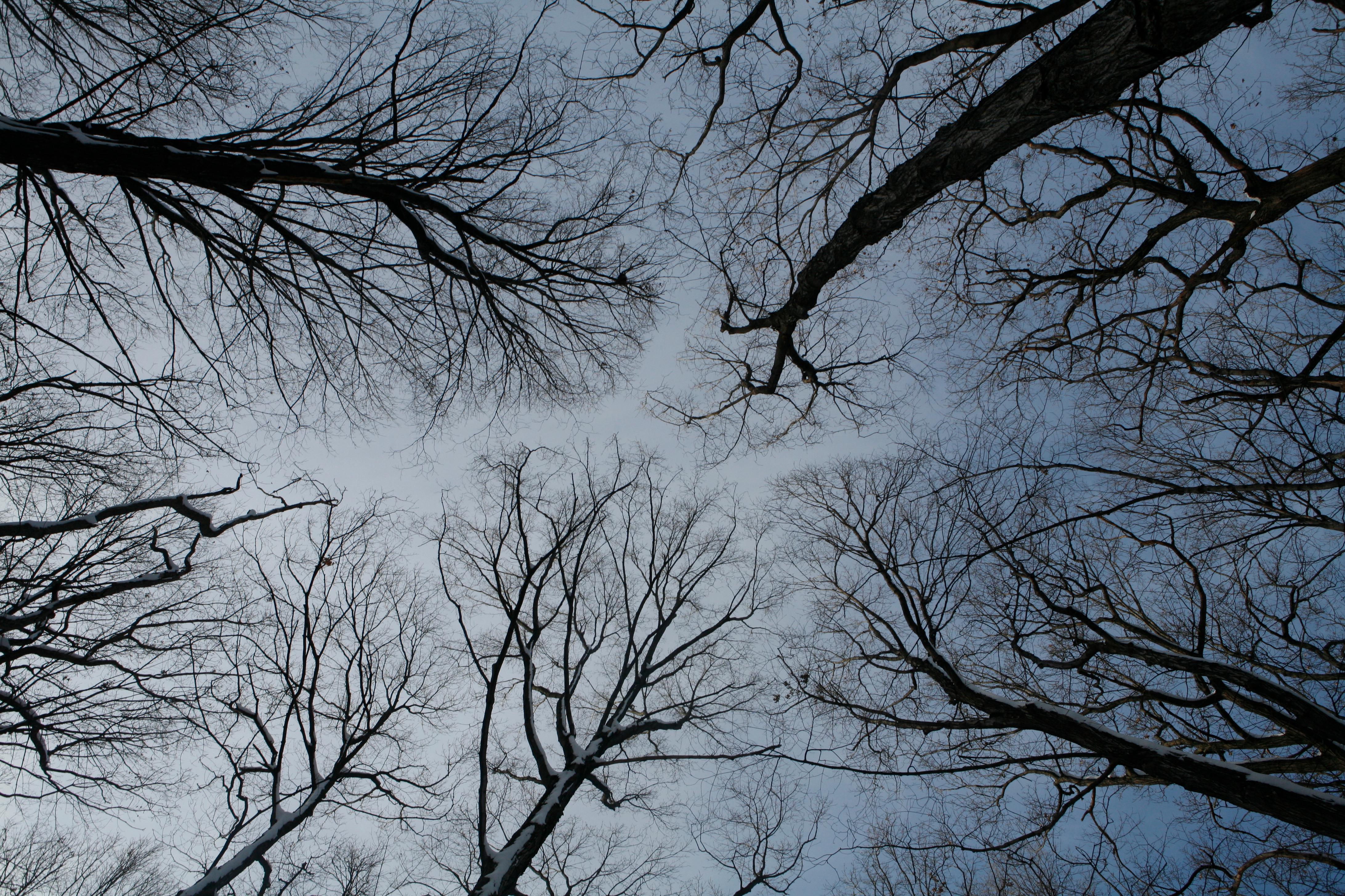 Tree Meeting