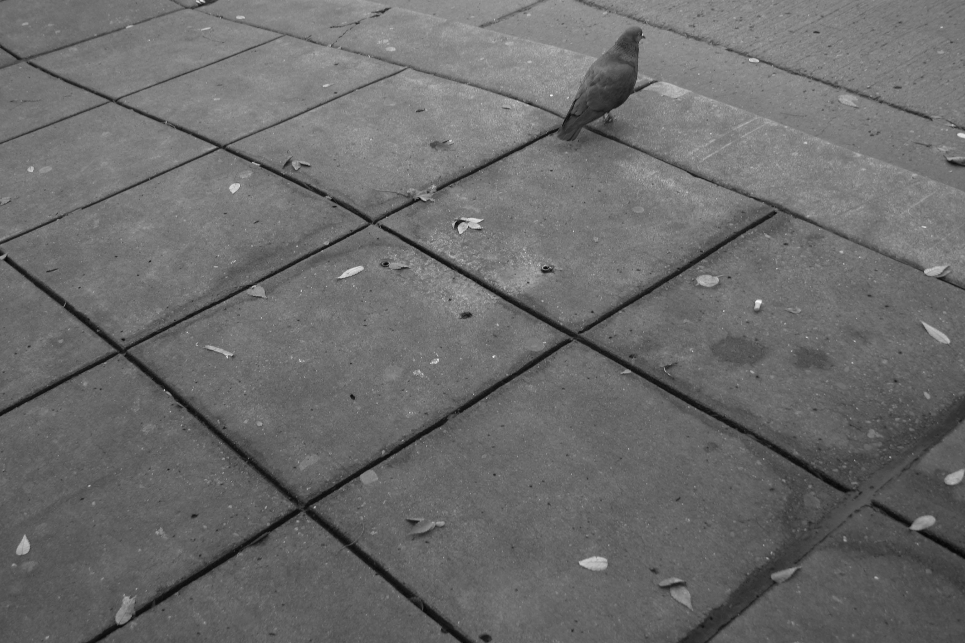 bird_grid.jpg