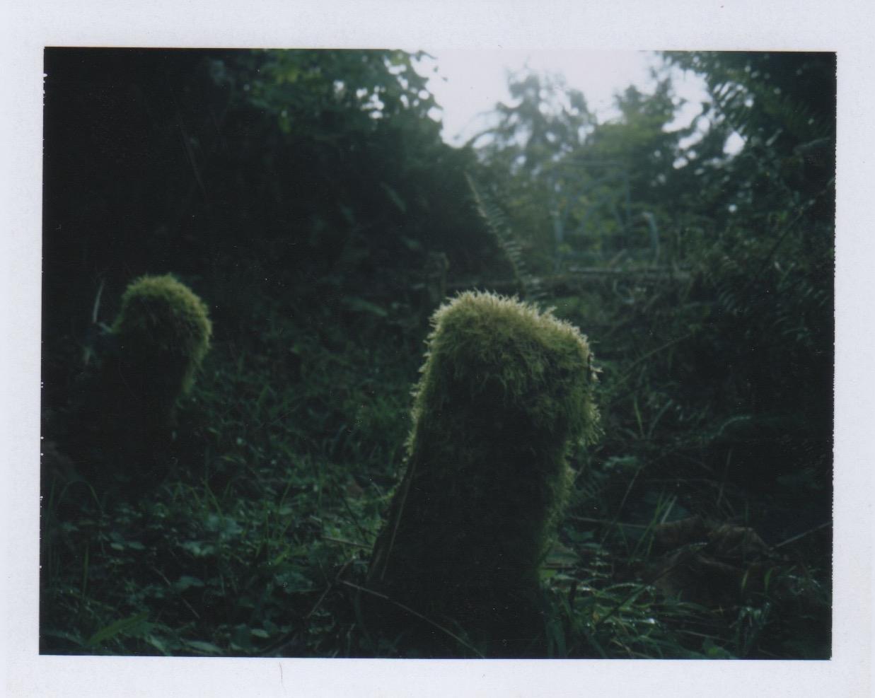 Ryan Ao Portland Vintage Film