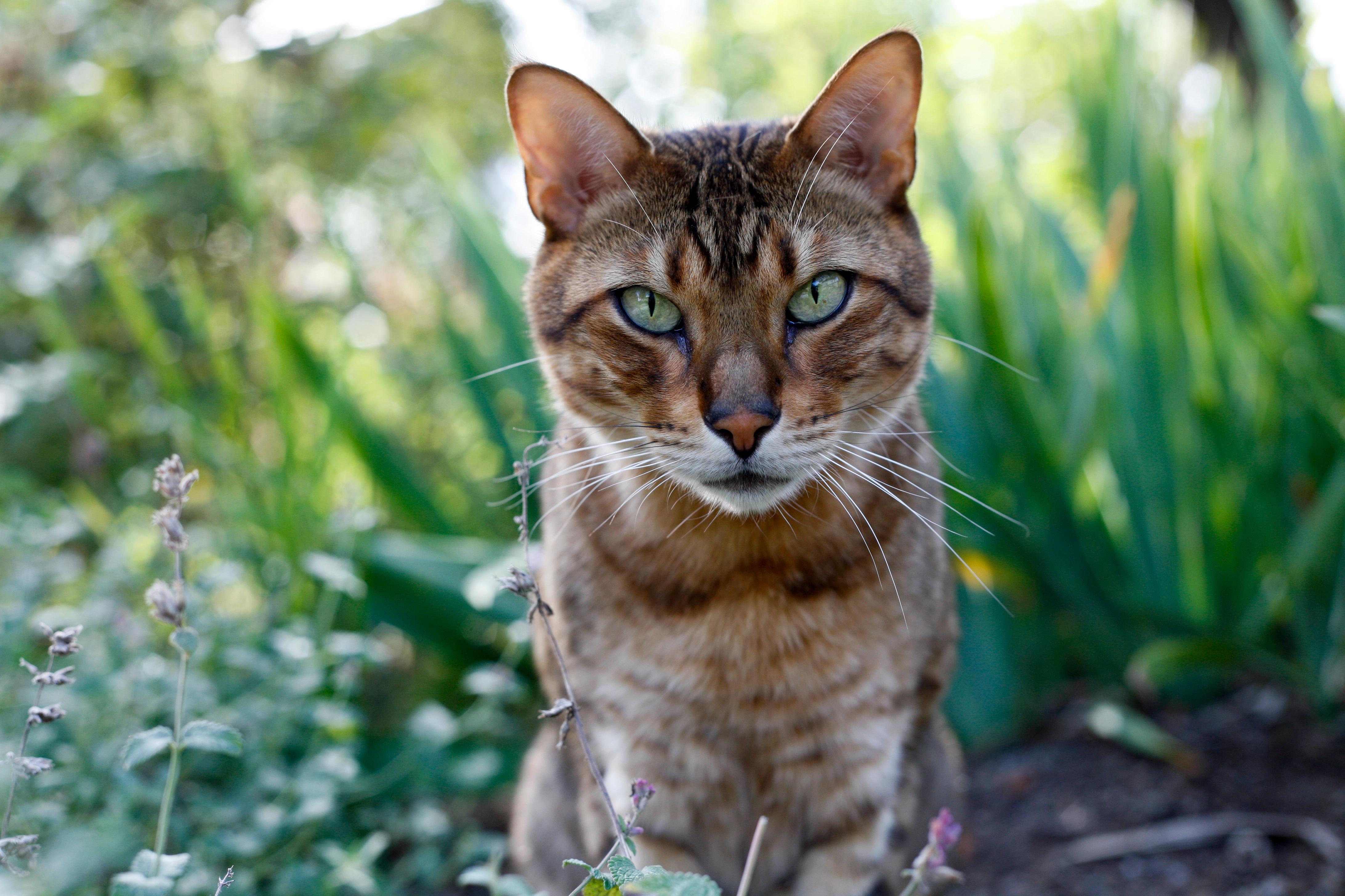Cat Gaze Craze