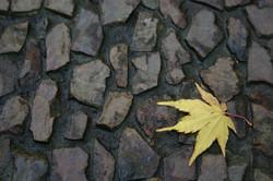 pebble_leaf.jpg