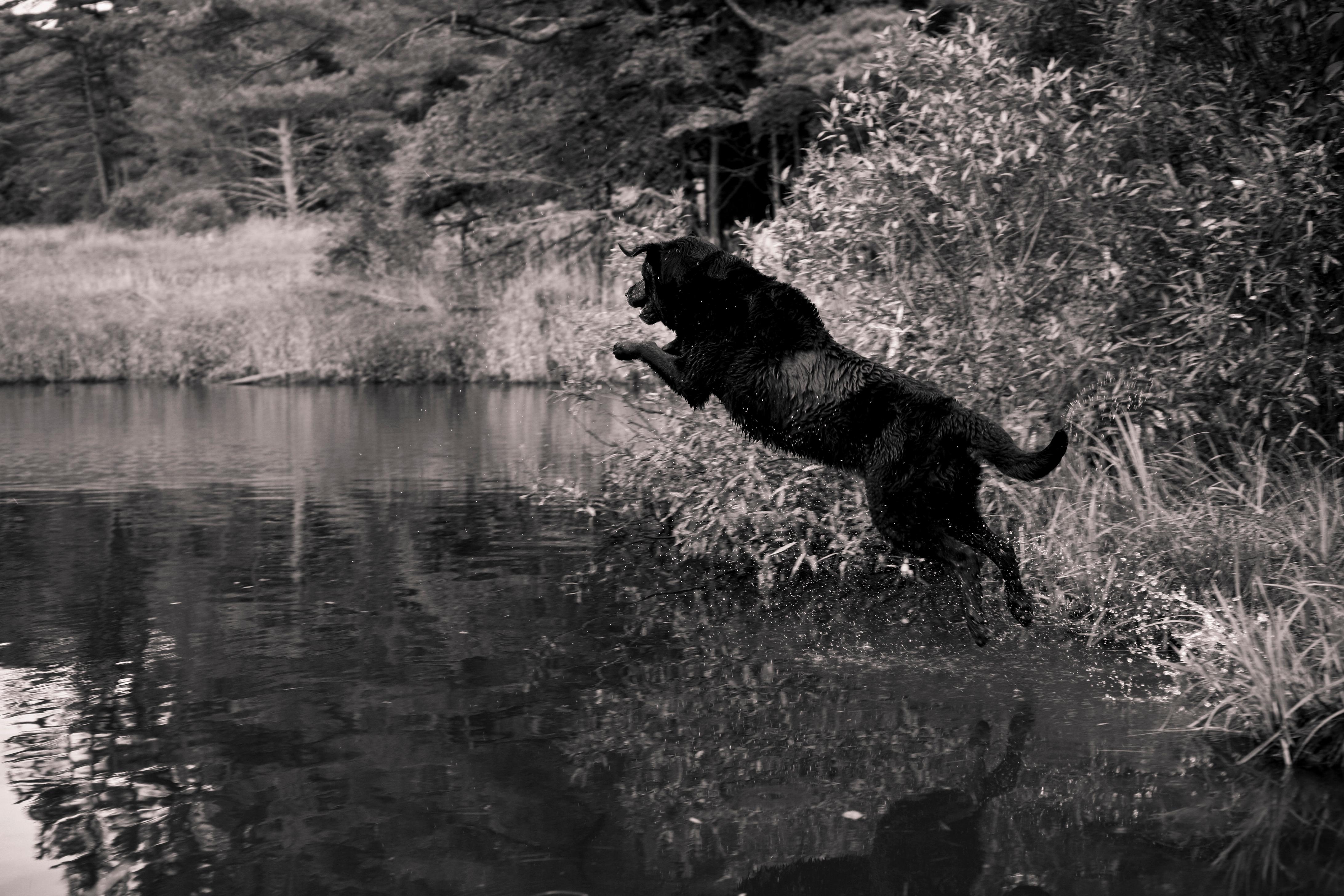 Leap Fetch
