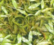 DSCN0285_edited.jpg