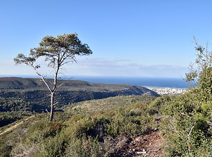 Mount Carmel.jpg