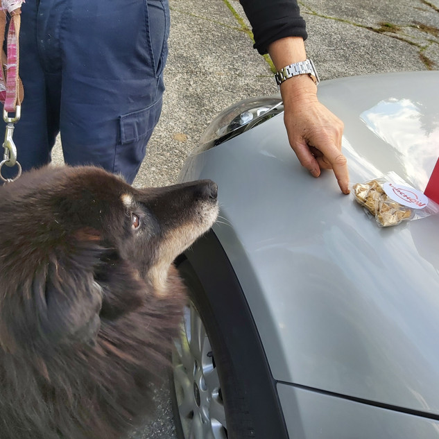 Rufus checking out a delivery of ouw new treat ideas! She's a BIG love.
