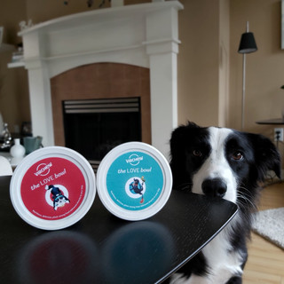 Seva (Top Dog at Virchew HQ!)