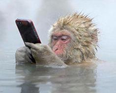 hot apring monkey-2.jpg