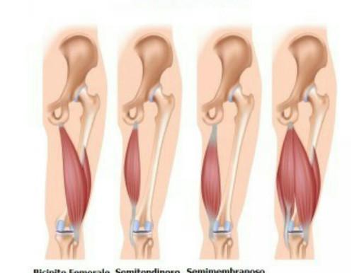 Cosa sono i muscoli ischiocrurali e come mantenerli flessibili