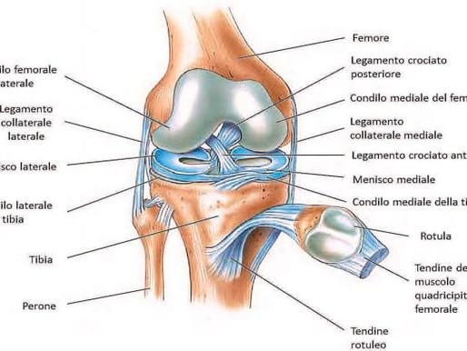 Il ginocchio: incrementare la sua stabilità e mobilità attraverso la GYROKINESIS®