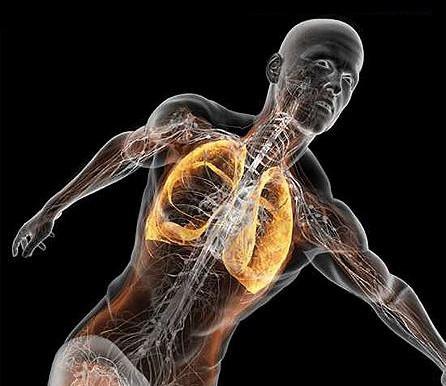 Struttura e funzioni dei muscoli respiratori: come allenarli attraverso la GYROKINESIS®