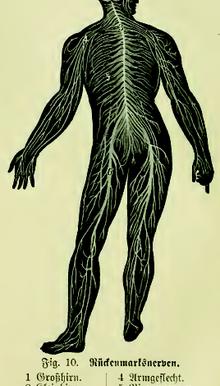 Struttura e funzioni del Sistema Nervoso