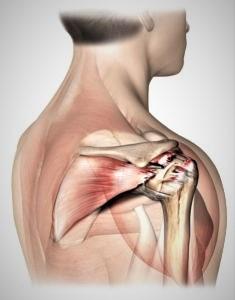 Anatomia della spalla: riconquistare la giusta posizione attraverso la GYROKINESIS®
