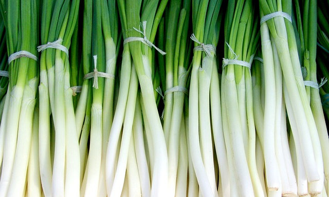 Green Onions (Sold by the bunch)