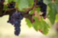 fruit-3215625_1280.jpg