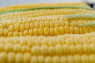 corn-5199393_640.jpg