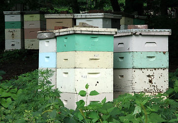 Beehives_in_Mankato,_Minnesota.jpg