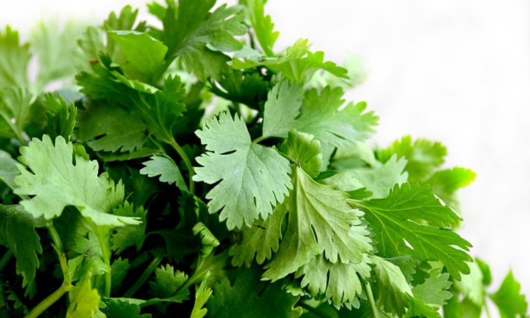 Cilantro (Sold by the bunch)