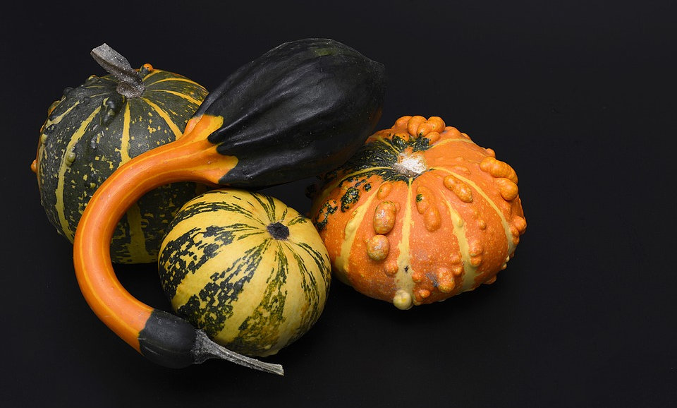 Gourds (Sold individually)