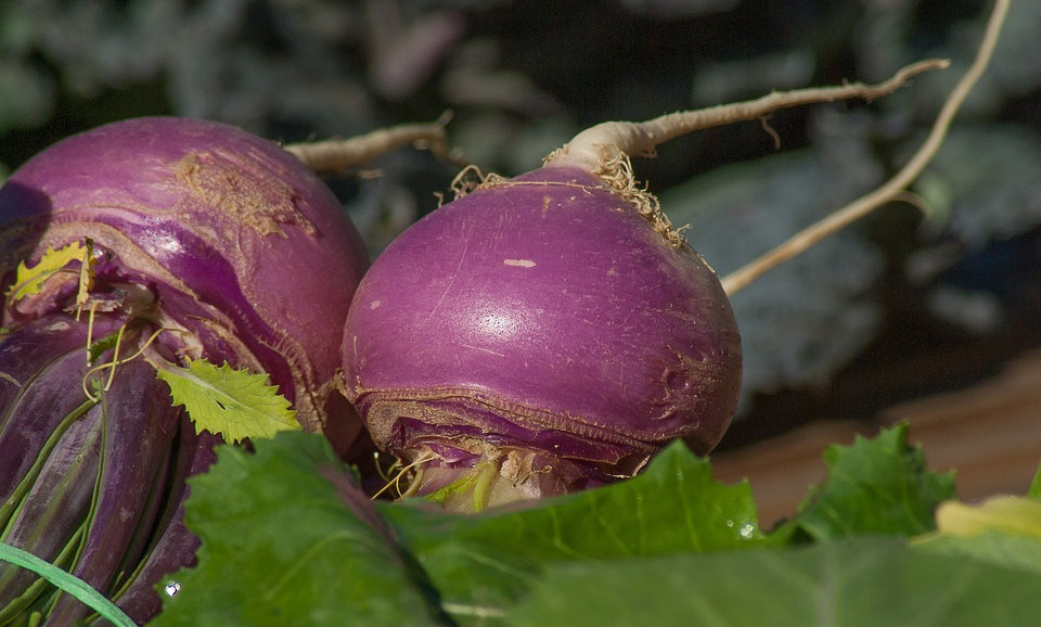 Turnips (Sold by the bunch)
