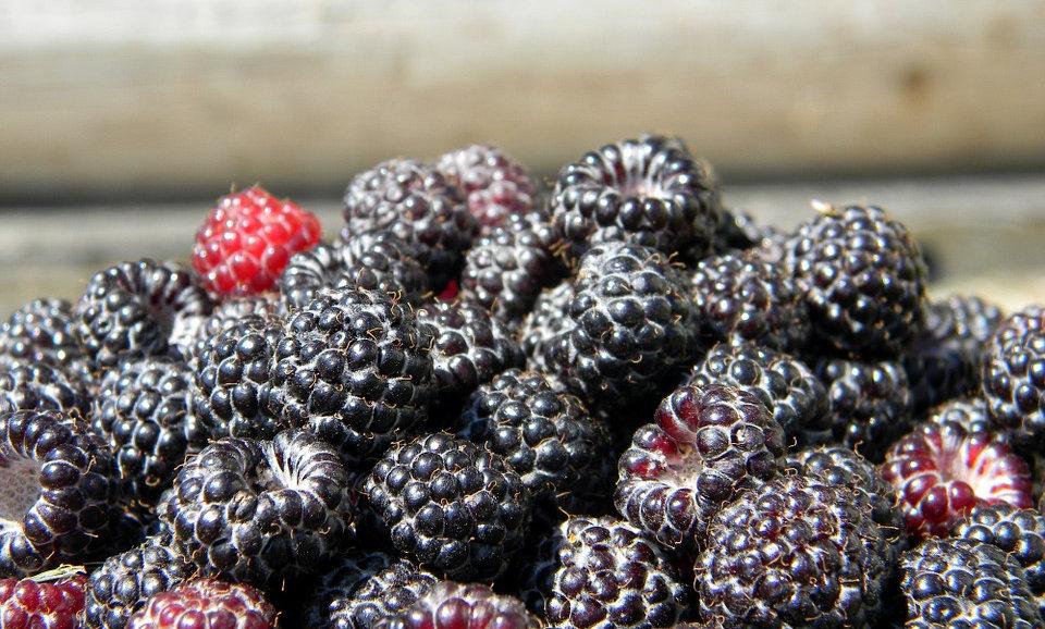 Black Raspberries (pint)