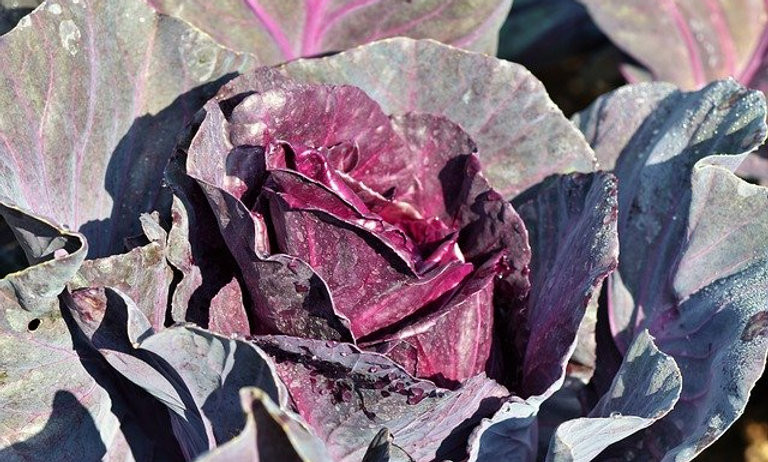Red Cabbage (lb)