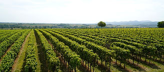 vineyards-5155218_1280.jpg