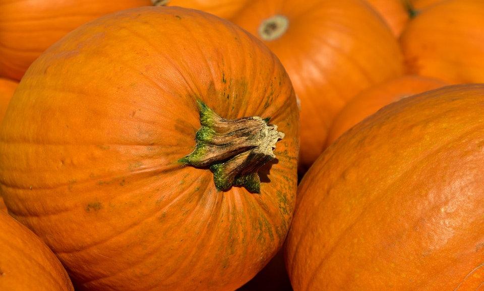 Pumpkins (Sold Individually