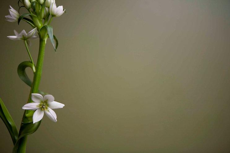 Weiße Blumen 2